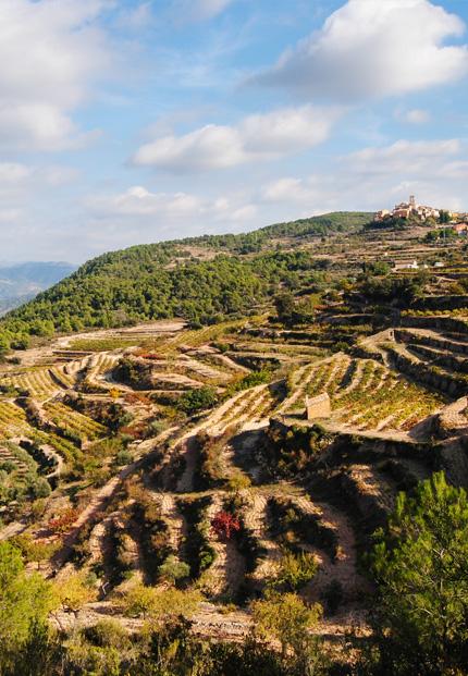 paisatge-agricultura-dona-priorat
