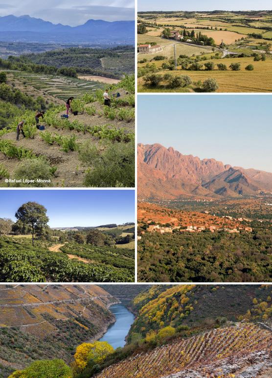 paisatge-agricultura-dona-mosaic-vertical_ok