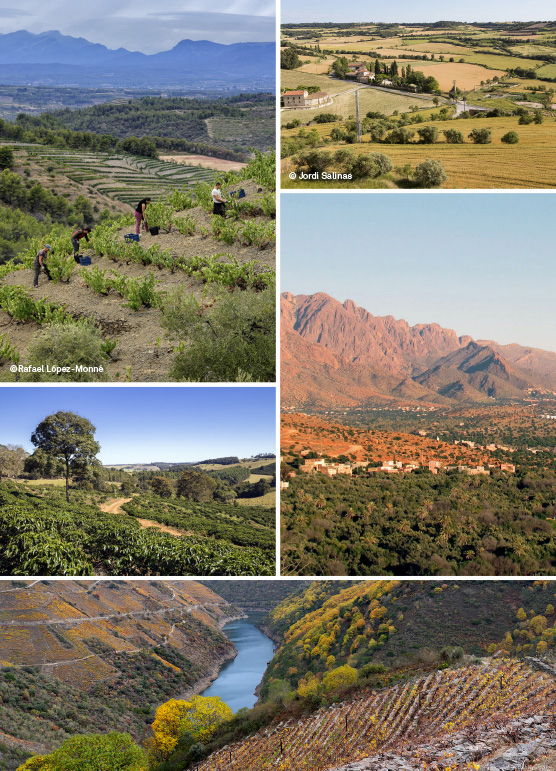 paisatge-agricultura-dona-mosaic-vertical_ok_bis